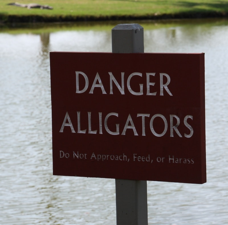 As IF I Would Harass An Alligator: My Visit To The Kiawah Island Golf Resort With Infiniti