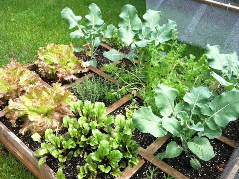 Square Foot Garden In The UK